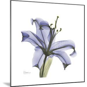 Lilac Lily by Albert Koetsier
