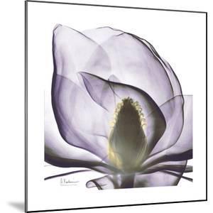Lilac Magnolia by Albert Koetsier