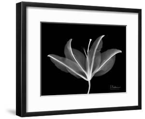 Lily C by Albert Koetsier