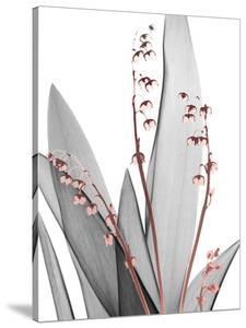 Lily of the Blush 1 by Albert Koetsier