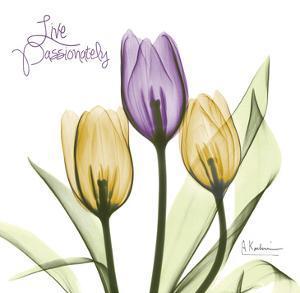 Live Passionately Tulips by Albert Koetsier