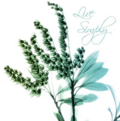 Live Simplyt