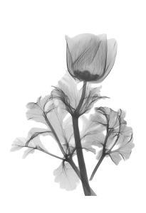 Lonely Anemone by Albert Koetsier