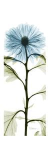 Long Blue Chrysanthemum by Albert Koetsier