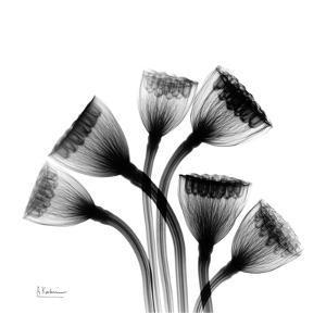 Lotus Lamps_L43 by Albert Koetsier