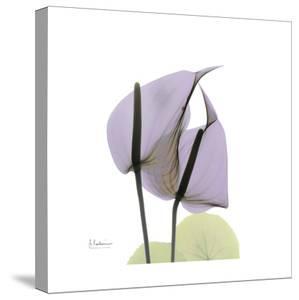 Lounging Lavender by Albert Koetsier