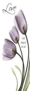 Love, Tulips in Purple by Albert Koetsier