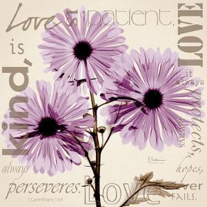Love, Violet Chrysanthemum by Albert Koetsier