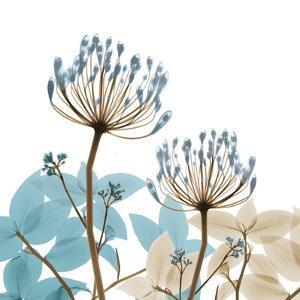 Lush Desert Bloom 1 by Albert Koetsier