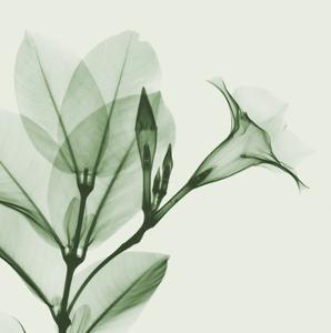 Madelia in Green by Albert Koetsier