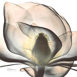 Magnolia Beauty by Albert Koetsier