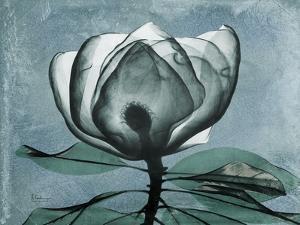 Magnolia Blues 2 by Albert Koetsier