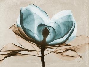 Magnolia I by Albert Koetsier