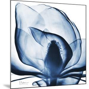 Magnolia Indigo by Albert Koetsier