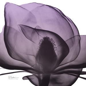 Magnolia Wine Beauty by Albert Koetsier