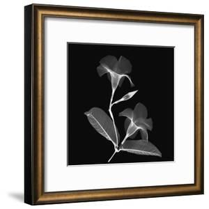 Mandelilla Shadow 2 by Albert Koetsier