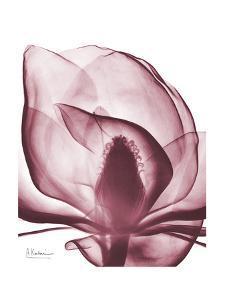 Marcela Magnolia by Albert Koetsier