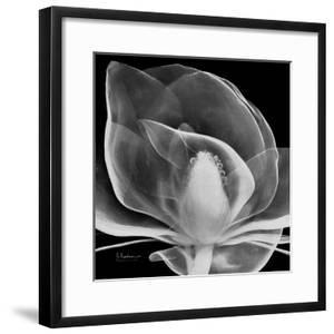 Midnight Queen Magnolia by Albert Koetsier