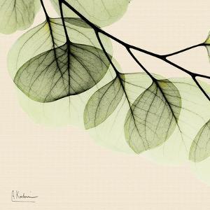 Mint Eucalyptus 3 by Albert Koetsier