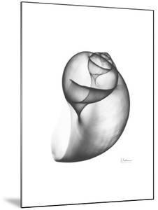 Moon Snail Twist Up by Albert Koetsier