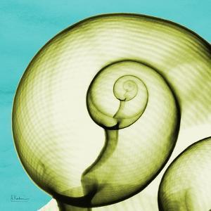 Moon Snail by Albert Koetsier