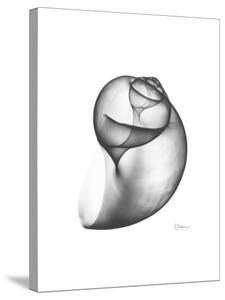 Moonsnail 3 by Albert Koetsier