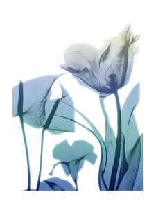 Morning Bloom 2 by Albert Koetsier