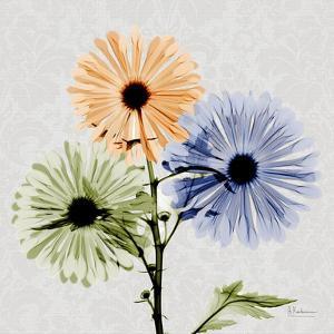 Multi Chrysanthemum by Albert Koetsier