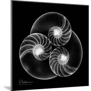 Nautilus Shell Xray by Albert Koetsier