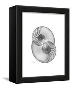 Nautilus Twins by Albert Koetsier
