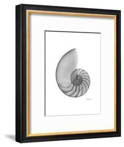 Nautilus Xray by Albert Koetsier