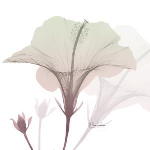 Neapolitan Hibiscus by Albert Koetsier