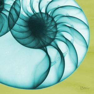 Neon Nautilus by Albert Koetsier