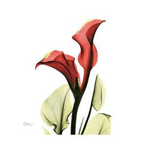 New Red Calla Lily by Albert Koetsier