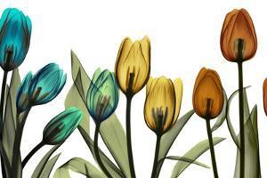New Tulipscape by Albert Koetsier
