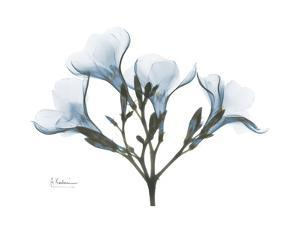 Oleander in Blue by Albert Koetsier