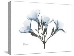 Oleander in Blue by Albert Koetsier