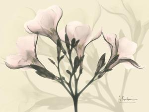 Oleander in Pink on Beige by Albert Koetsier