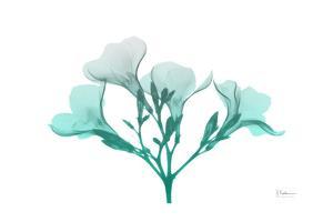 Oleander Turq Ombre by Albert Koetsier