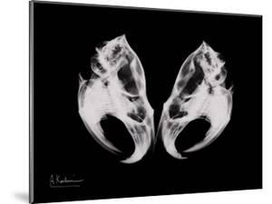 Ondatra Twins by Albert Koetsier