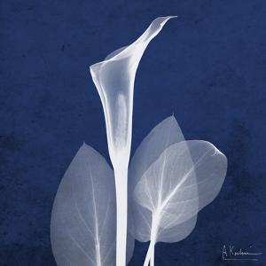 One Indigo Calla Lily by Albert Koetsier