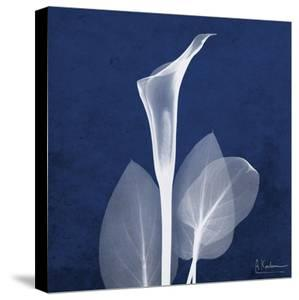 One Indigo Calla Lily by Albert Koetsier