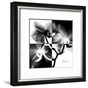 Orchid Black and White on Squares by Albert Koetsier