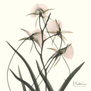 Orchid Bouquet in Pink by Albert Koetsier