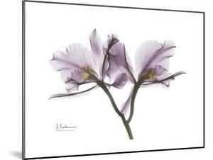Orchid Portrait by Albert Koetsier