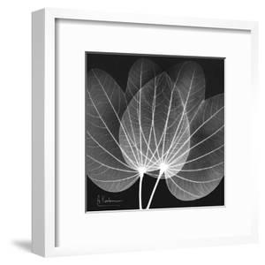 Orchid Tree Black and White by Albert Koetsier