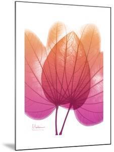 Orchid Tree Pink Orange by Albert Koetsier