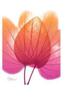 Orchid Tree by Albert Koetsier