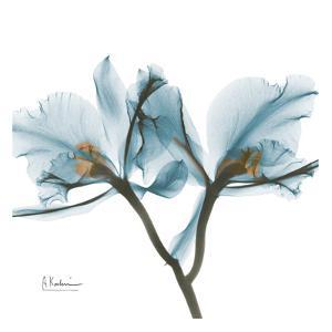 Orchids in Blue by Albert Koetsier