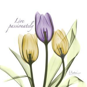 Passionately Tulip by Albert Koetsier